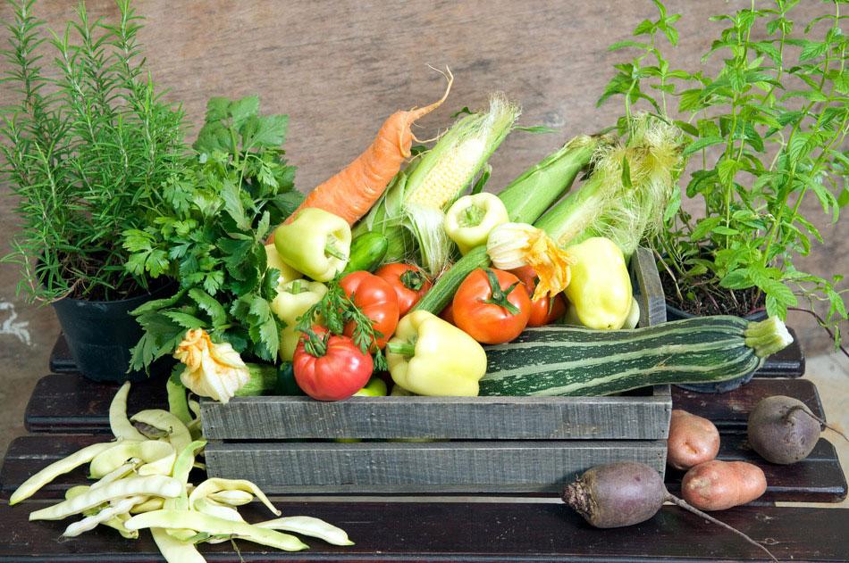 photodune-1150623-fresh-herbs-and-vegetables-s