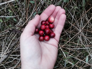 cranberry in hand 2