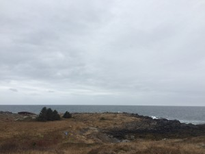 lobster cove 2